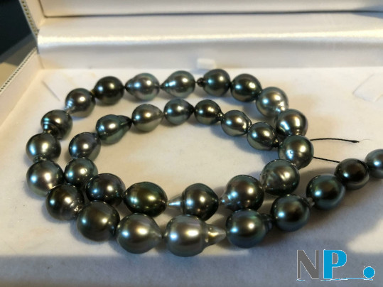 Collana di perle di Tahiti con colori alternati chiaro scuro, perle quasi rotonde di gran bel lustro brillante