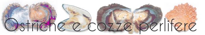 Ostriche e cozze che producono le perle che amiamo tanto
