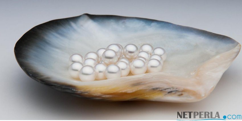 Informazioni sulle Perle di Coltura